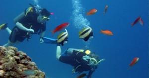 Duiken malediven