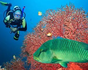 Duikvakantie Malediven