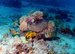 Koraal Malediven
